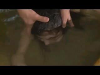 露天風呂で巨乳娘の顔を水に押し付ける水責め&スパンキングレイプ!